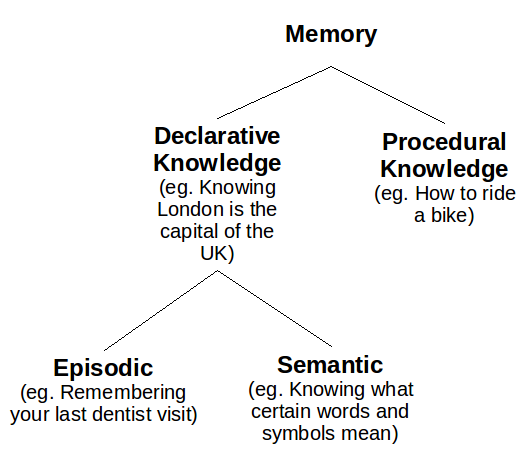 short term memory theory essay